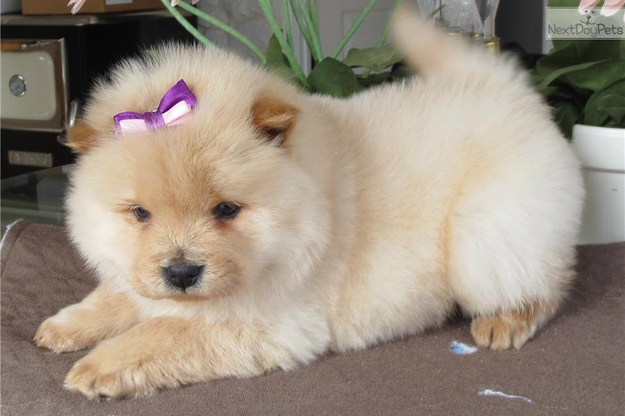 25 Most Adorable Puppy Breeds Page 22 Funtalitycom