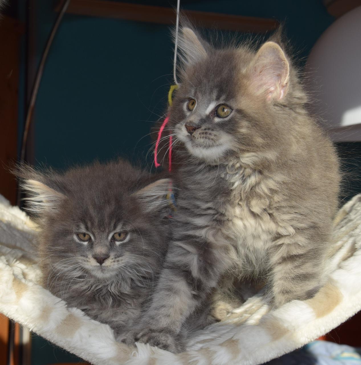 Cute Kittens Gallery – Funtality