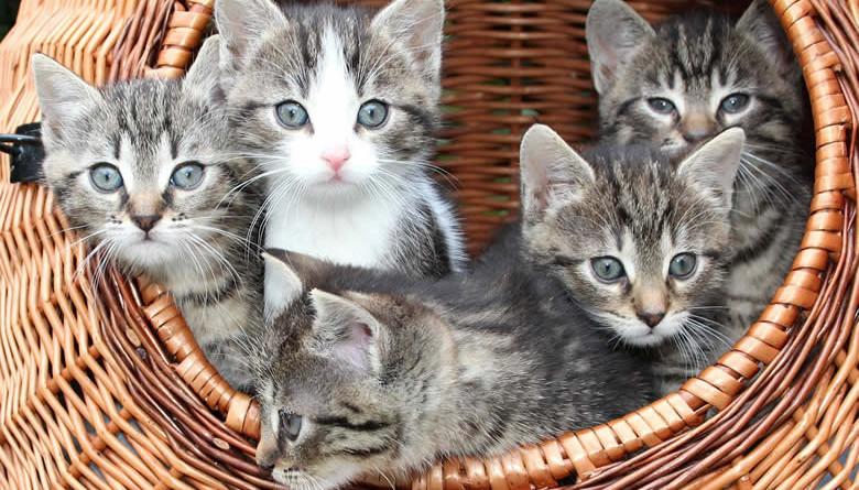 kittens_cover