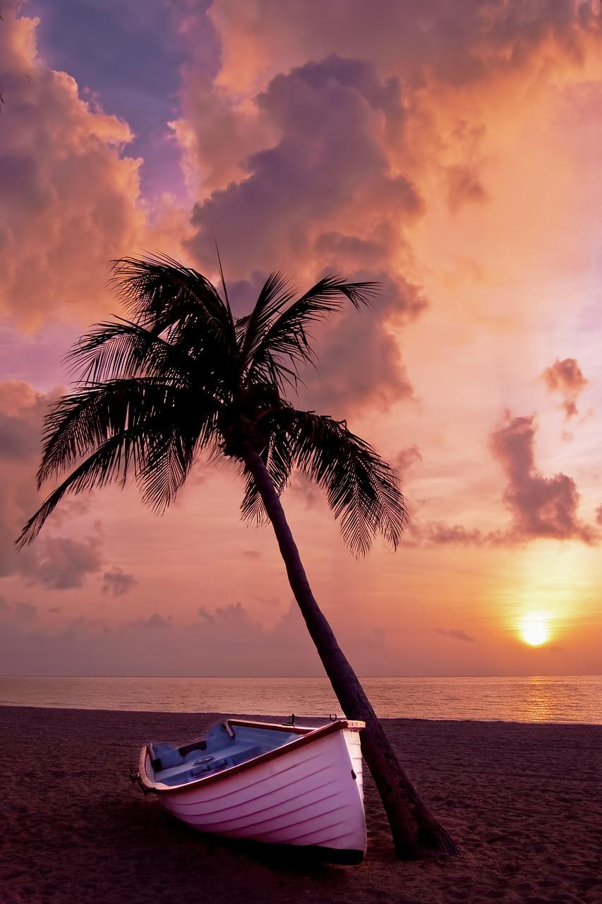 palm-tree-166738_1280