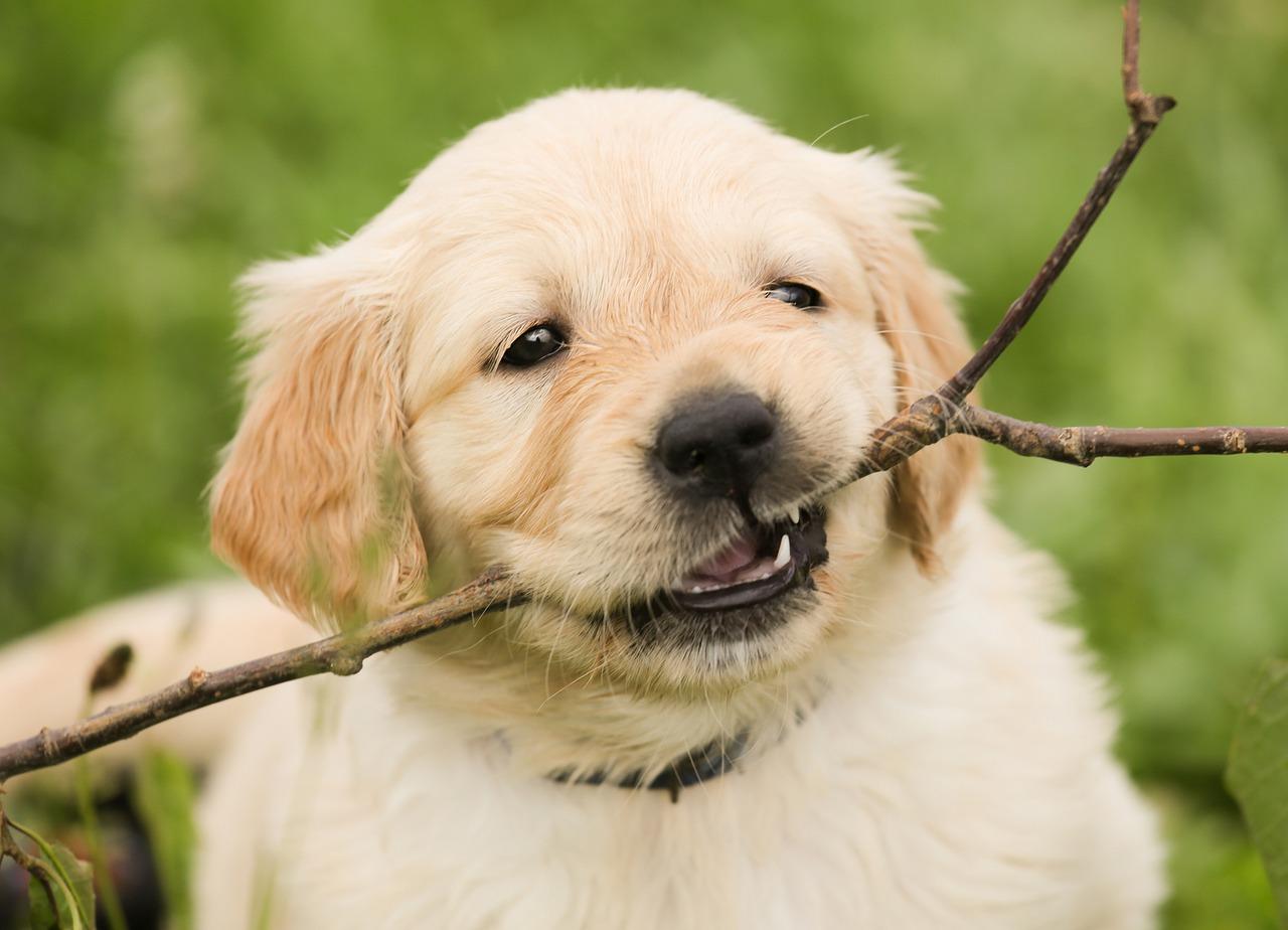 puppy-1189067_1280