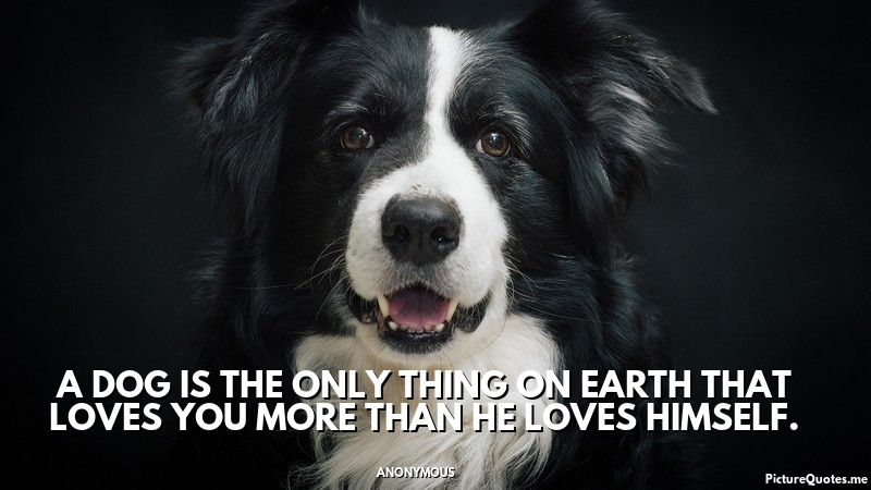 anonymous_quote_a_dog_is_the_only_thing_on_earth_that_loves_you_more_than_he_loves_himself_5426