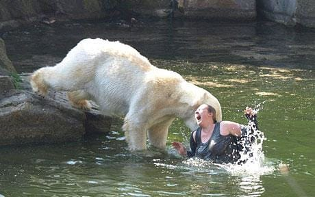 polar_bear_attacking_woman